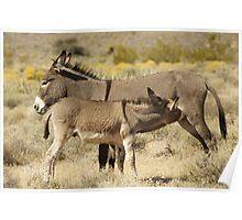 Wild Donkeys Red Rock Canyon- NV Poster