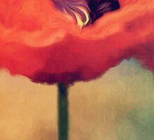 Red Poppy Flower by Rosie Nixon