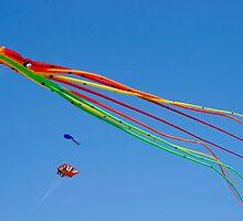 The Kite by Alan Gillam
