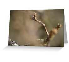 Fresh Buds Of Growth Greeting Card