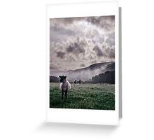 Sheep in the Mist Greeting Card