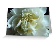 White Carnation Greeting Card