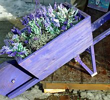Lavender wheelbarrow by Arie Koene