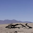 Death Valley National Park by paulgranahan