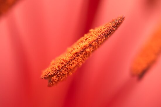 A touch of macro by Penny Rinker
