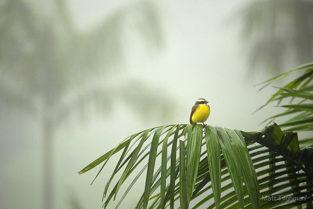 Break from the Crowds (Costa Rica) by Matt Tilghman