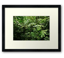 Heart of the Rain Forest (Costa Rica) Framed Print