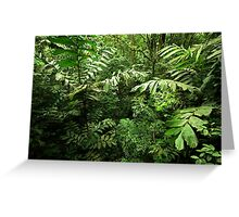 Heart of the Rain Forest (Costa Rica) Greeting Card