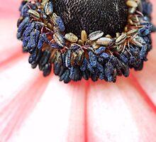 Red Anemone....(IV) by Bob Daalder