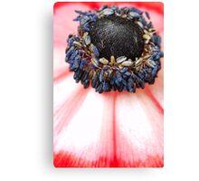 Red Anemone....(IV) Canvas Print