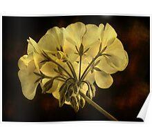 Geranium Flower Texture Poster