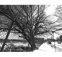 Tree Versus Fence Photographic Print
