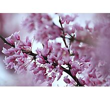 A Thousand Blossoms Photographic Print