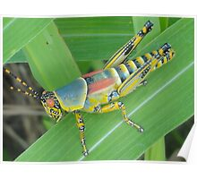 Colourful beauty Pest Poster