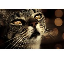 golden eye Photographic Print