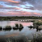 The Torquay Wetlands (6) by Larry Davis