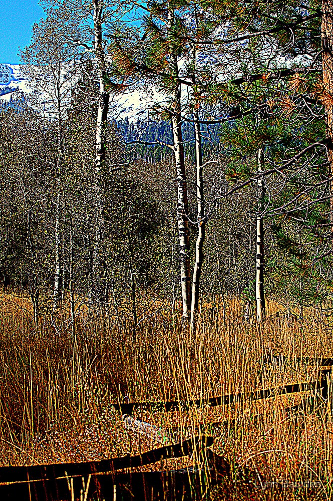 Split Rail Fence by Lynn Bawden