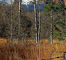 Split Rail Fence by Lynn Bawden