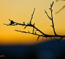 Sunset Branch by finsphotos