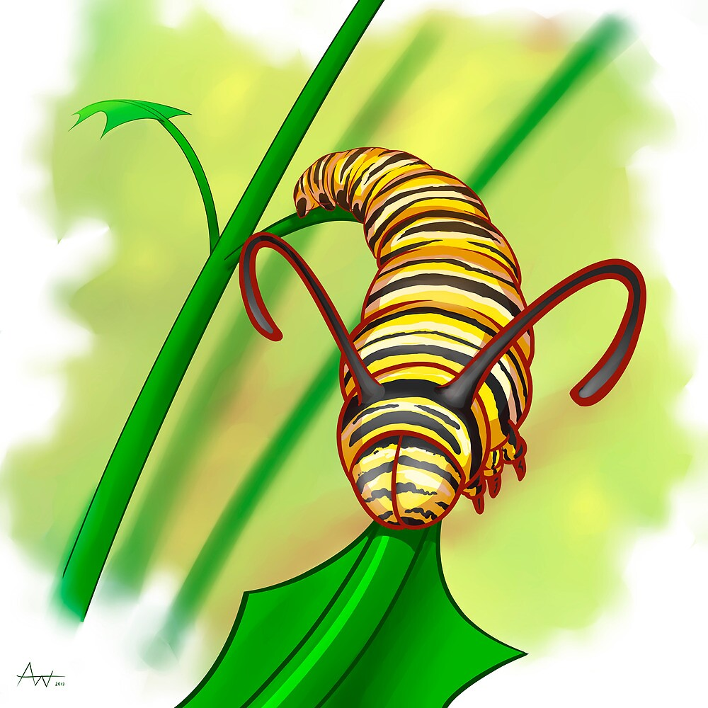 Monarch by AbelWalker