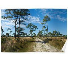 Flatwood Preserve Pine Island FL Poster