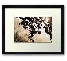 Under the Tree Leaves Framed Print