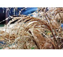 Magical Icecapades Photographic Print