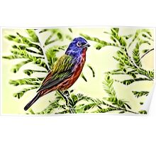 Wild nature - colourful bird Poster