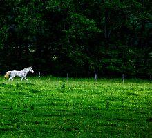 Across the Meadow by KristaDawn
