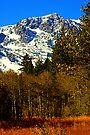 """""""Mount Tallac"""" by Lynn Bawden"""