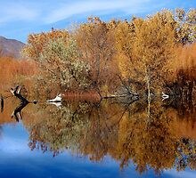 Reflective Moments by Vicki Pelham