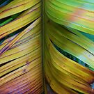 BANANA LEAF BROADCAST by NICK COBURN PHILLIPS