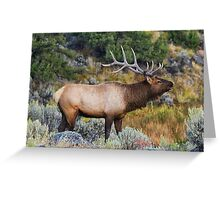 Bugling Bull - Yellowstone National Park Greeting Card