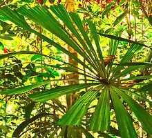 FAN PALM PRINT by NICK COBURN PHILLIPS