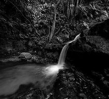Early Morning_Leura Cascades by Sharon Kavanagh