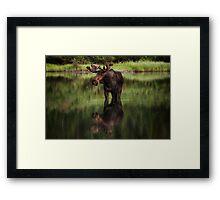 Reflecting Bull - Many Glacier Framed Print
