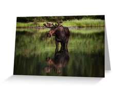 Reflecting Bull - Many Glacier Greeting Card