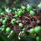 Balls, Green by mjds
