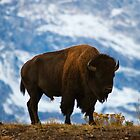 Teton Bison - Grand Teton National Park by Mark Kiver