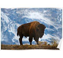 Teton Bison - Grand Teton National Park Poster