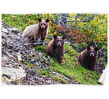 The Three Amigos - Black Bear Cubs Poster