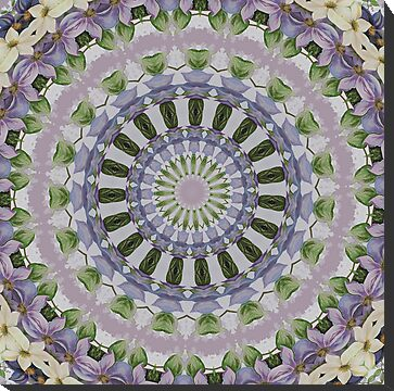 Clematis Kaleidoscope by taiche