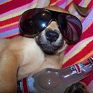 Party Animal by Elizabeth Burton