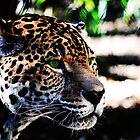 Green-eyed Leopard by Darrick Kuykendall