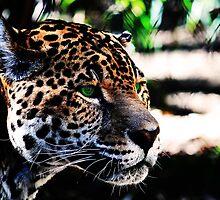 Green-eyed Leopard by Darrick Kuykendall