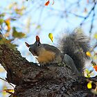 Squirrel Tree by Darrick Kuykendall