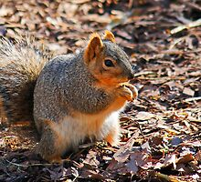 Squirrel Hands by Darrick Kuykendall