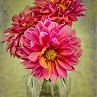 Dahlias! by Lyn Darlington
