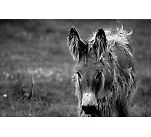 Oh Little Donkey Photographic Print