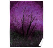 Tree and Purple Sky, Evening Poster